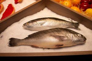 lumicenter apresenta novidades e tendências no mercosuper 2019 - iluminação em peixes
